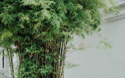 Sådan kommer ud af med uønsket bambus