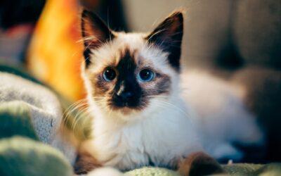 Tryg behandling af kæledyr ved Herning dyrlæge
